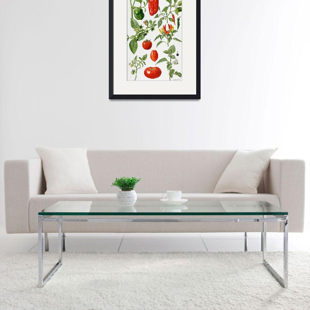 """Tomatoes and related vegetables by E. Rice&quot  by fineartmasters"