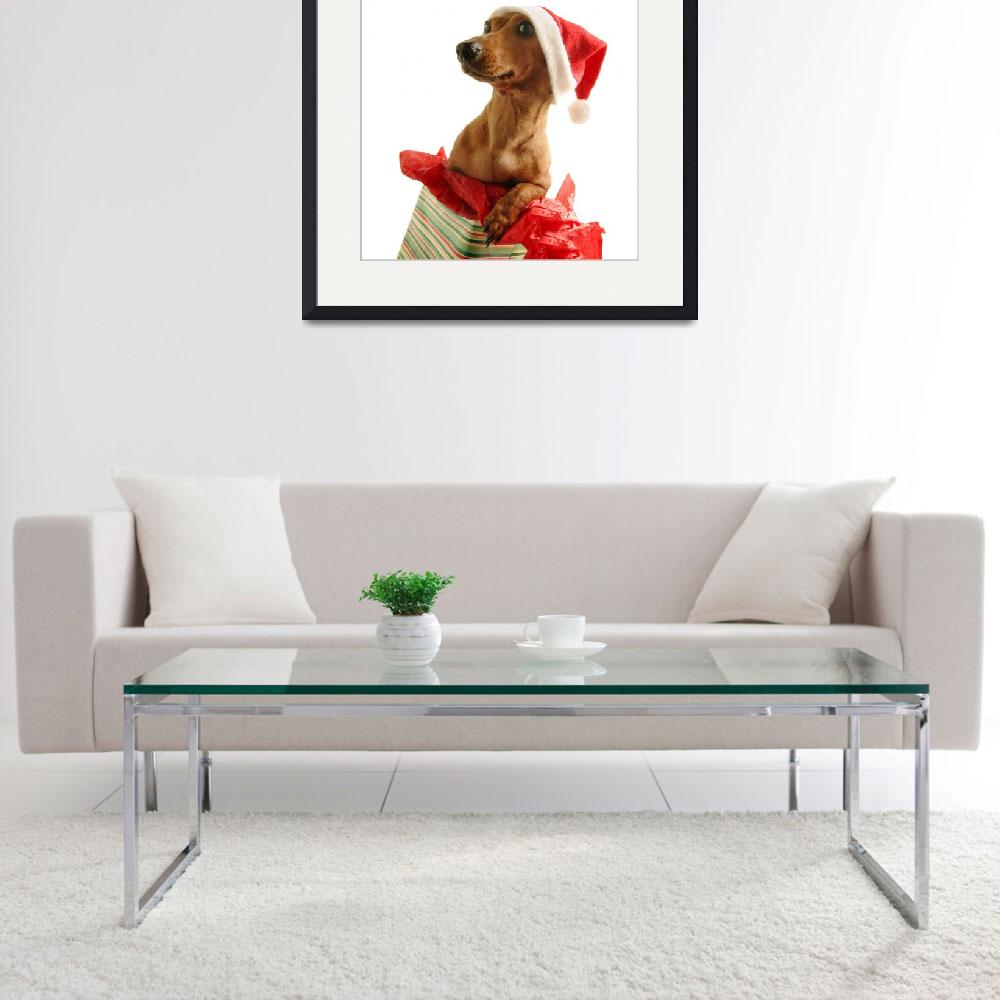 """Dachshund Wearing A Santa Hat&quot  by DesignPics"