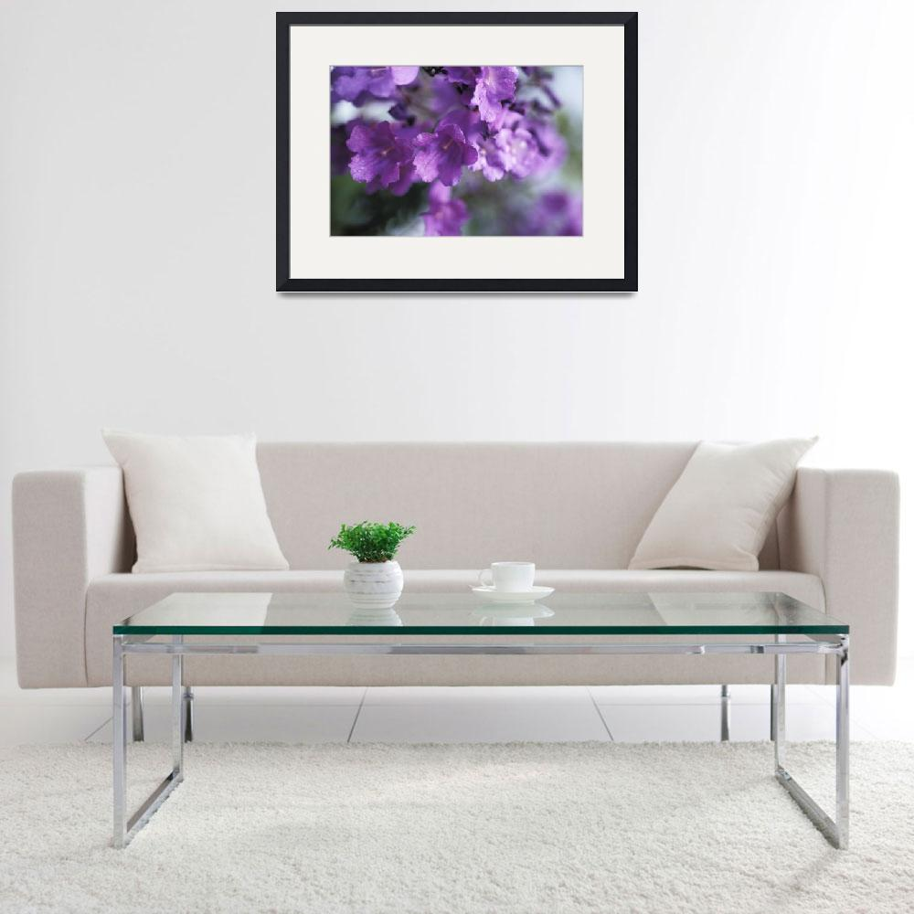 """Jacaranda Fern Tree, Soft Focus, Purple Flower&quot  by DesignPics"