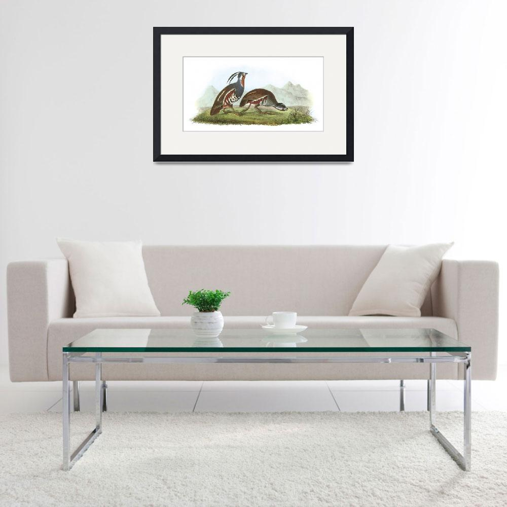 """Mountain Quail Bird Audubon Print&quot  by ArtLoversOnline"