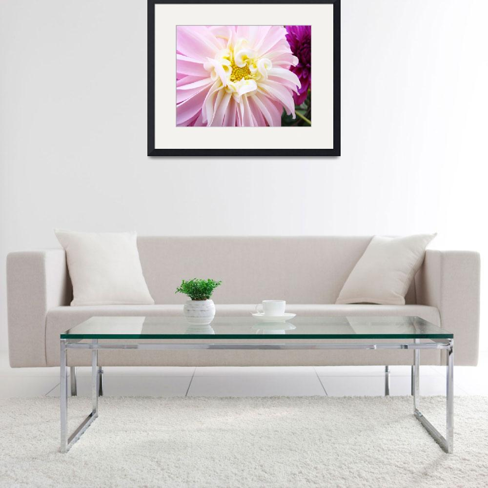 """PASTEL PINK WHITE Dahlia Flower Art Print&quot  (2009) by BasleeTroutman"