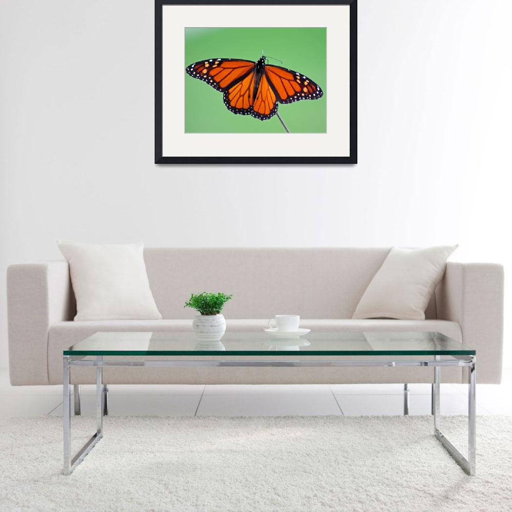 """Butterfly  Monarch&quot  (2011) by KsWorldArt"