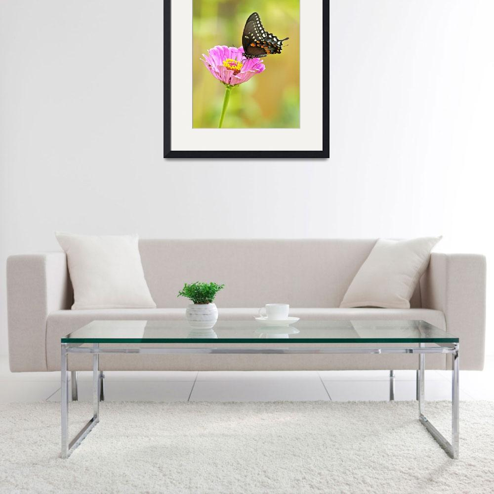 """Pipevine Swallowtail Butterfly&quot  (2010) by davisrobertb"