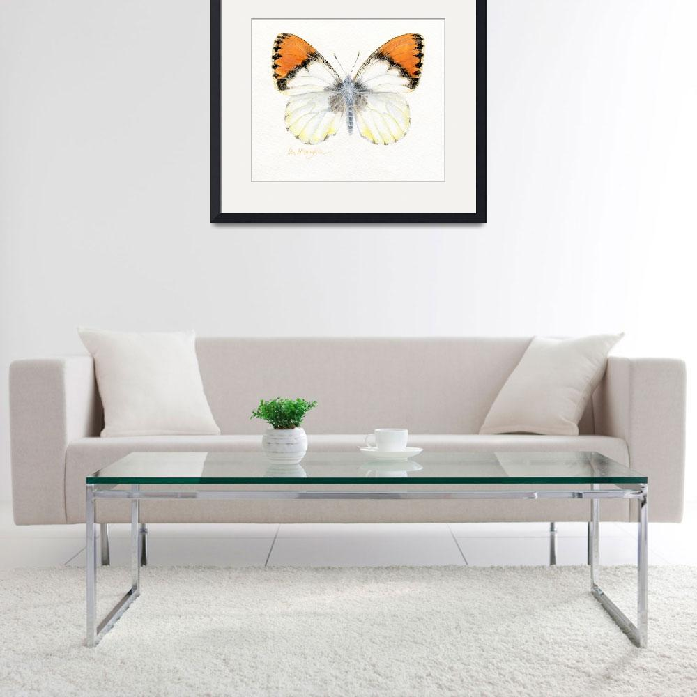 """Sara orangetip butterfly&quot  (2008) by LisaMclaughlin"