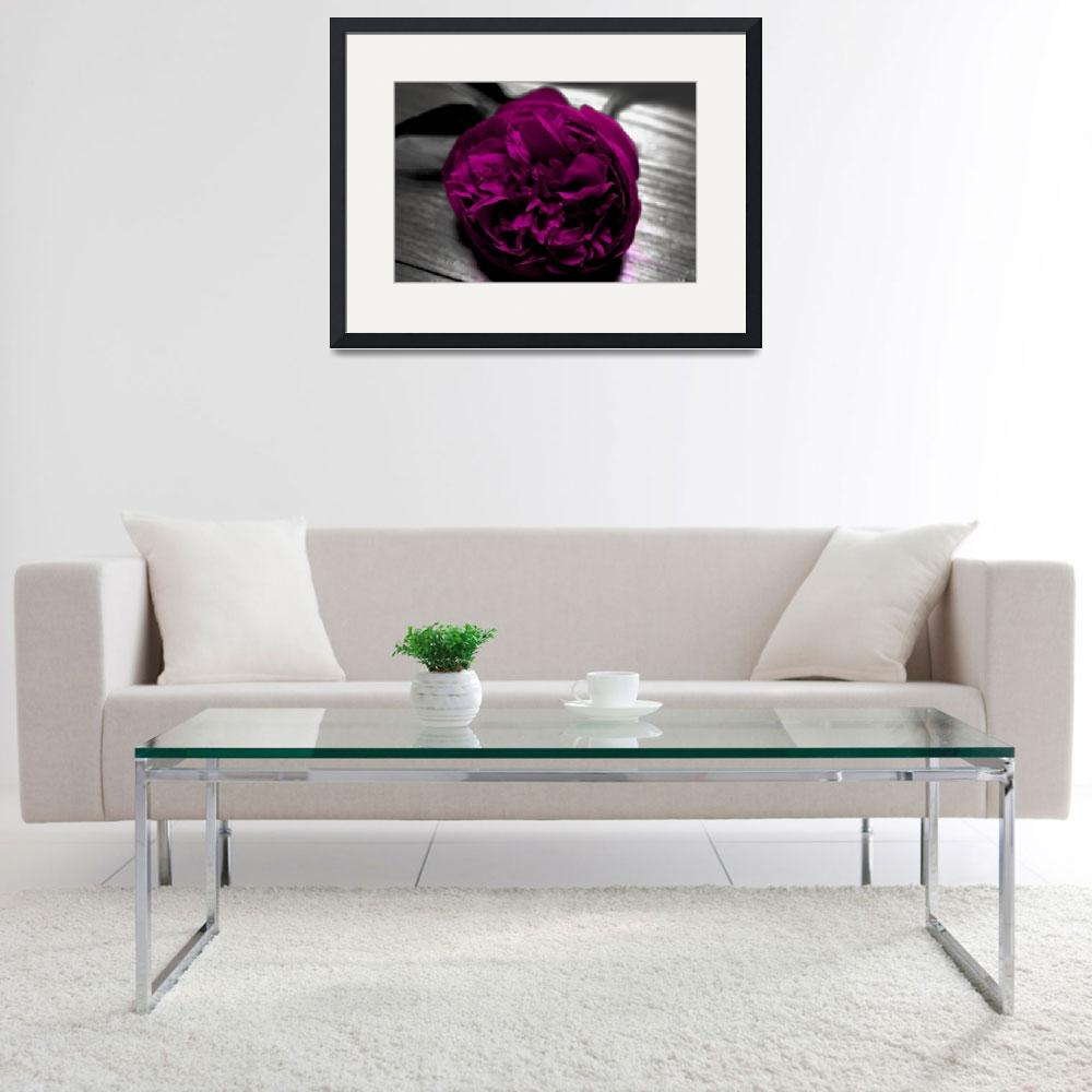 """Fuschia Peony in Black and White&quot  (2010) by KaliCollins"