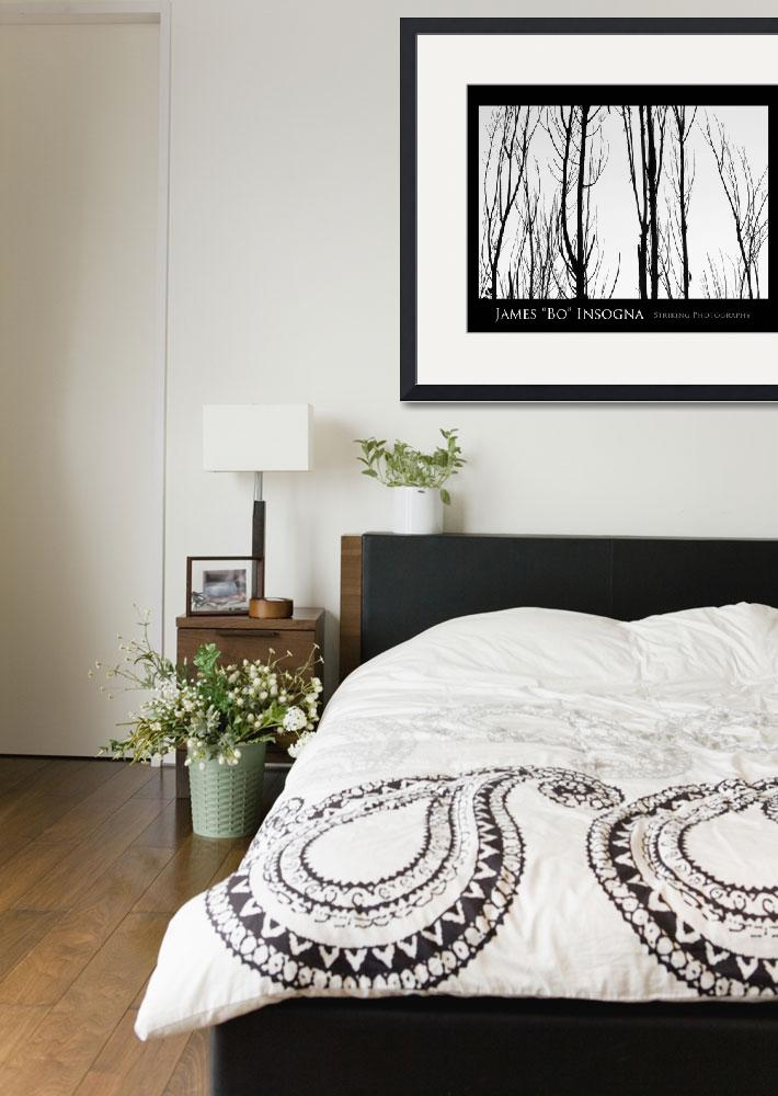 """Tree Branches Black and White  Abstract Poster&quot  (2010) by lightningman"