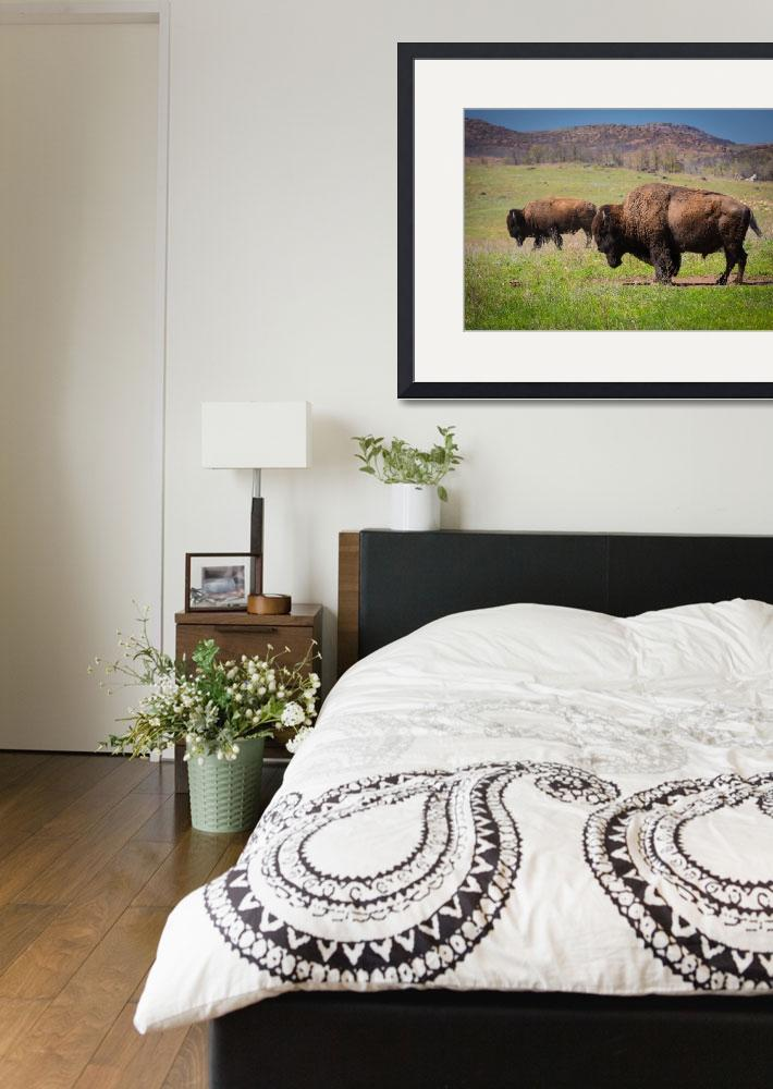 """Grazing Bison&quot  (2013) by Inge-Johnsson"