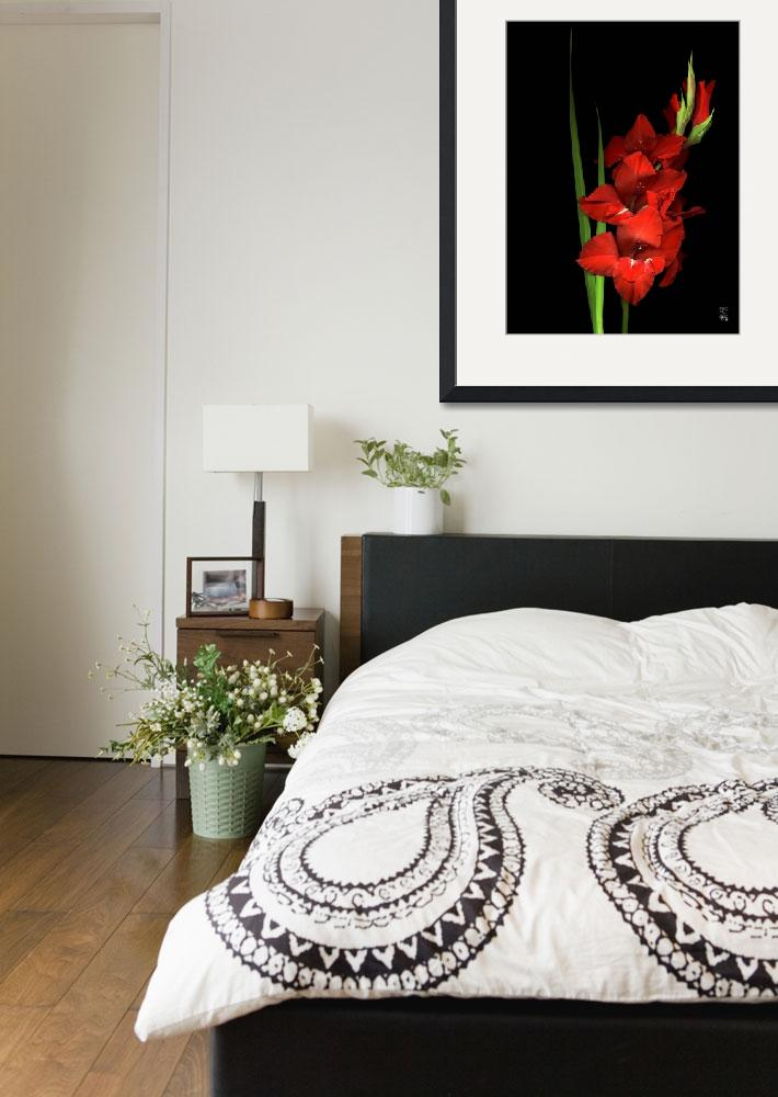 """Intense Red Gladiola&quot  (2005) by thirdeyeimage"
