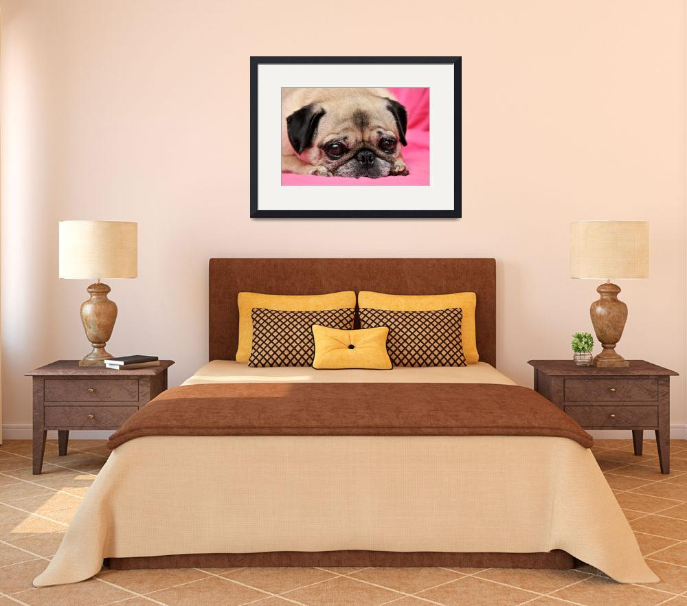 """Pug on Pink&quot  (2009) by ldfranklin"