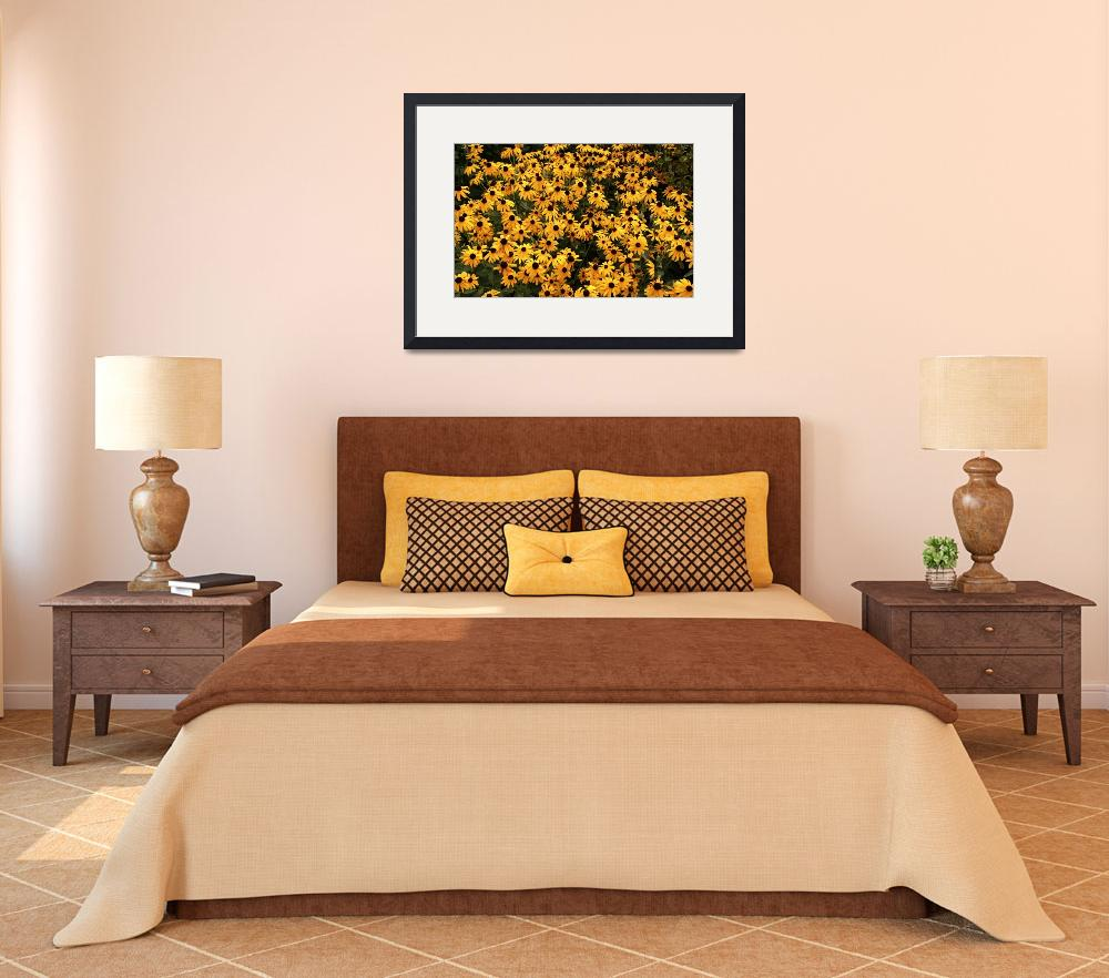 """Black-Eyed Susans&quot  (2007) by rogardphoto"