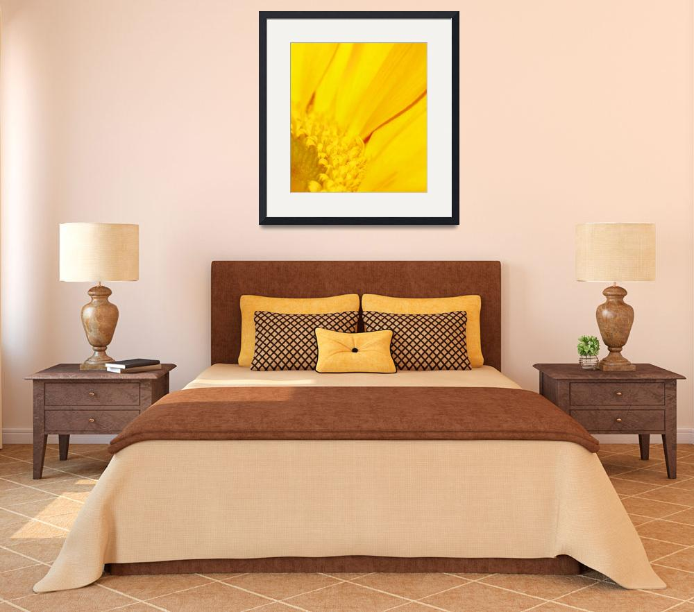 """Golden Gerbera&quot  (2009) by rayjacque"