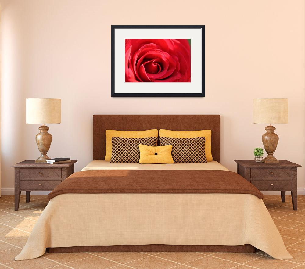 """RED ROSE Classic Deep Inside&quot  (2011) by ElliePhotoArt"