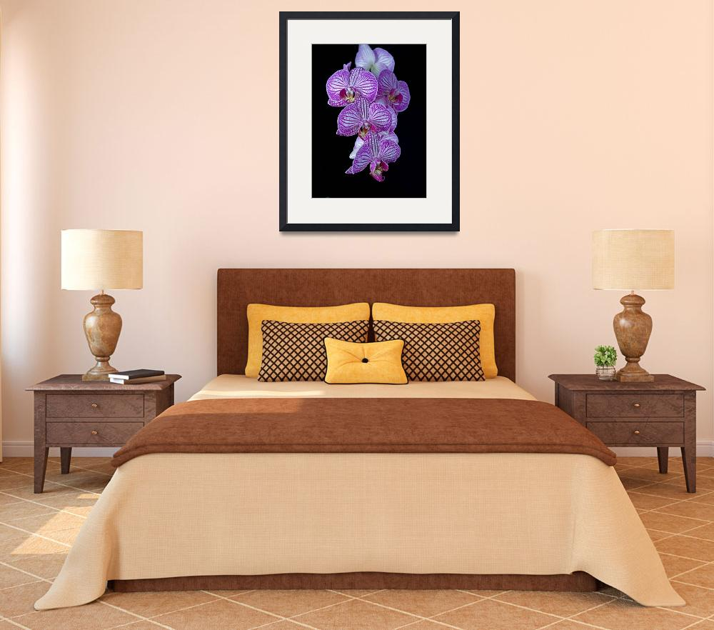 """Purple Veined Orchid&quot  (2011) by ianjeffrey"