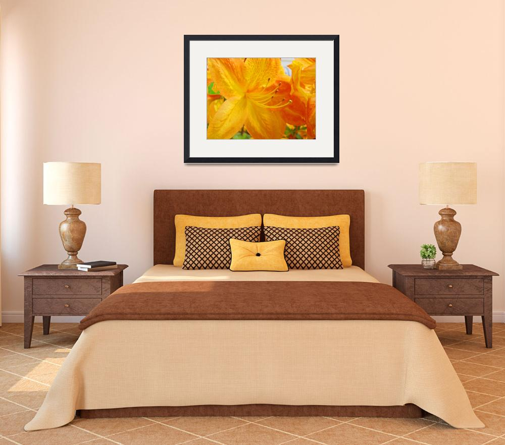 """Yellow Rhodies Azalea Flowers Orange Azaleas Art&quot  (2009) by BasleeTroutman"