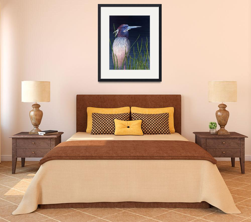 """BREEDING PLUMED TRICOLORED HERON&quot  by bohanart"