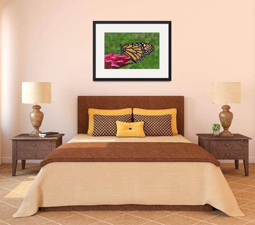 """Monarch Butterfly & Pink Zinnia No2&quot  (2011) by evansonart"