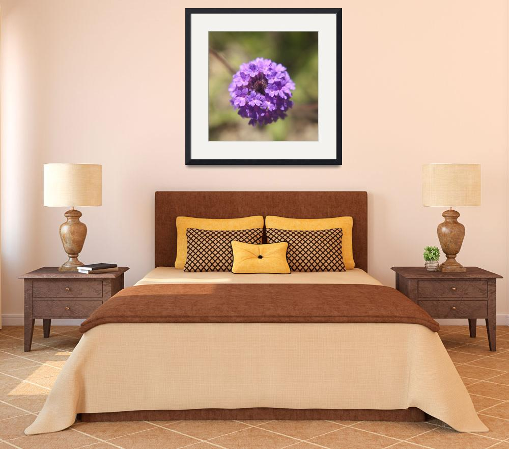 """Verbena rigida flower photography&quot  (2014) by SammyPhoto"