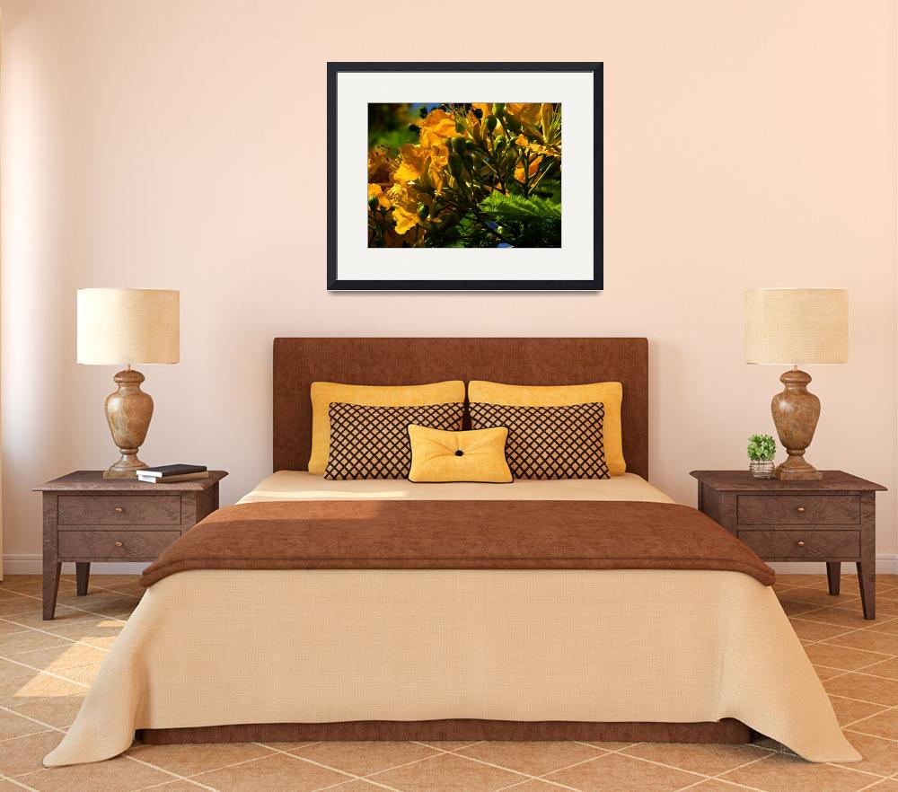 """Yellow Poinciana&quot  (2004) by paulyworksfineart"