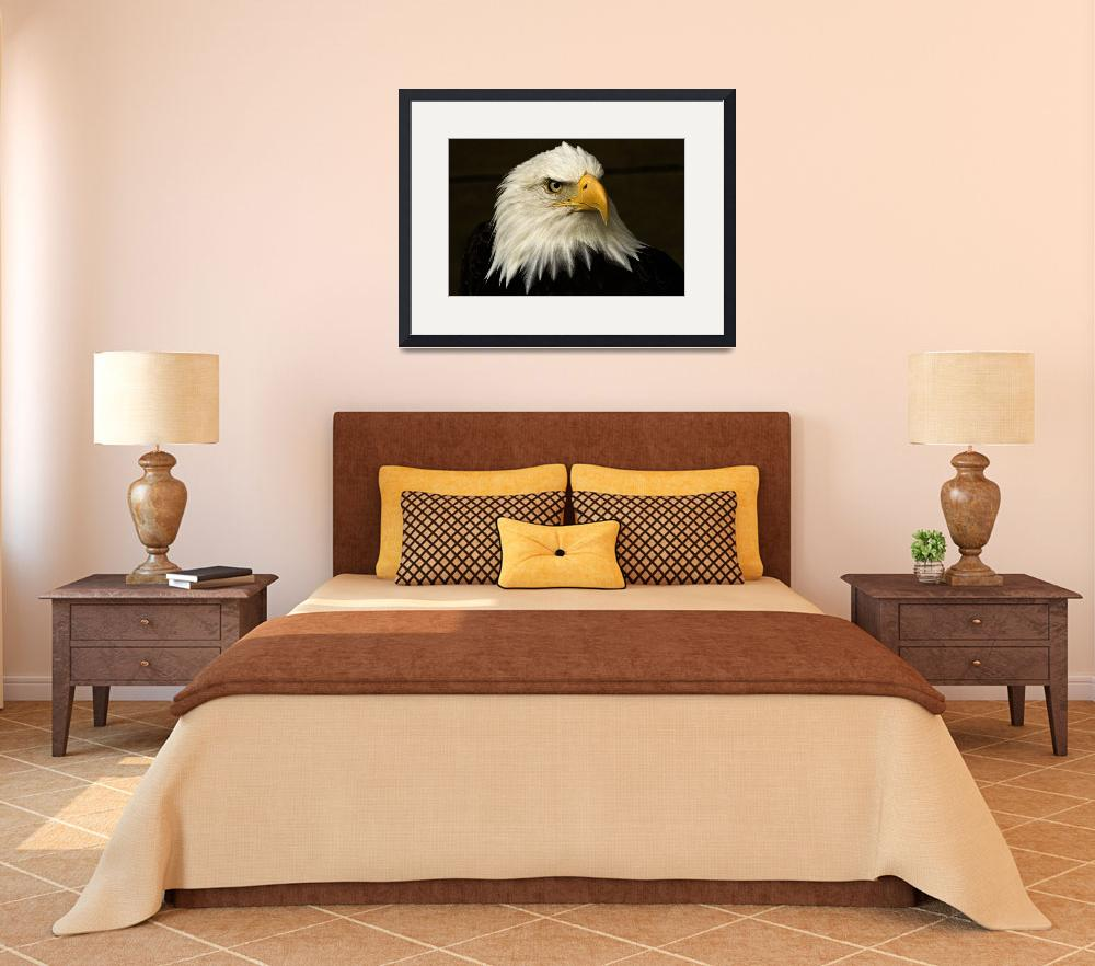 """Bald Eagle&quot  (2011) by MindsEyeImagery"