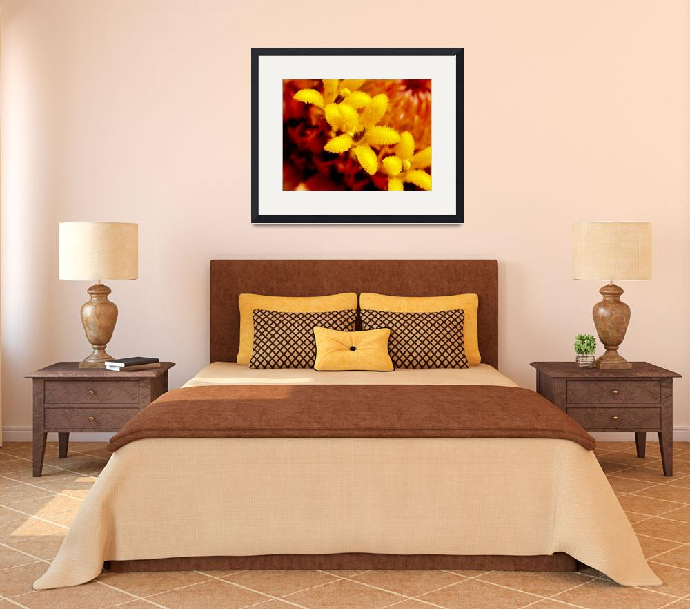 """Yellow flower in center of a zinnia&quot  (2007) by ElationAviation"
