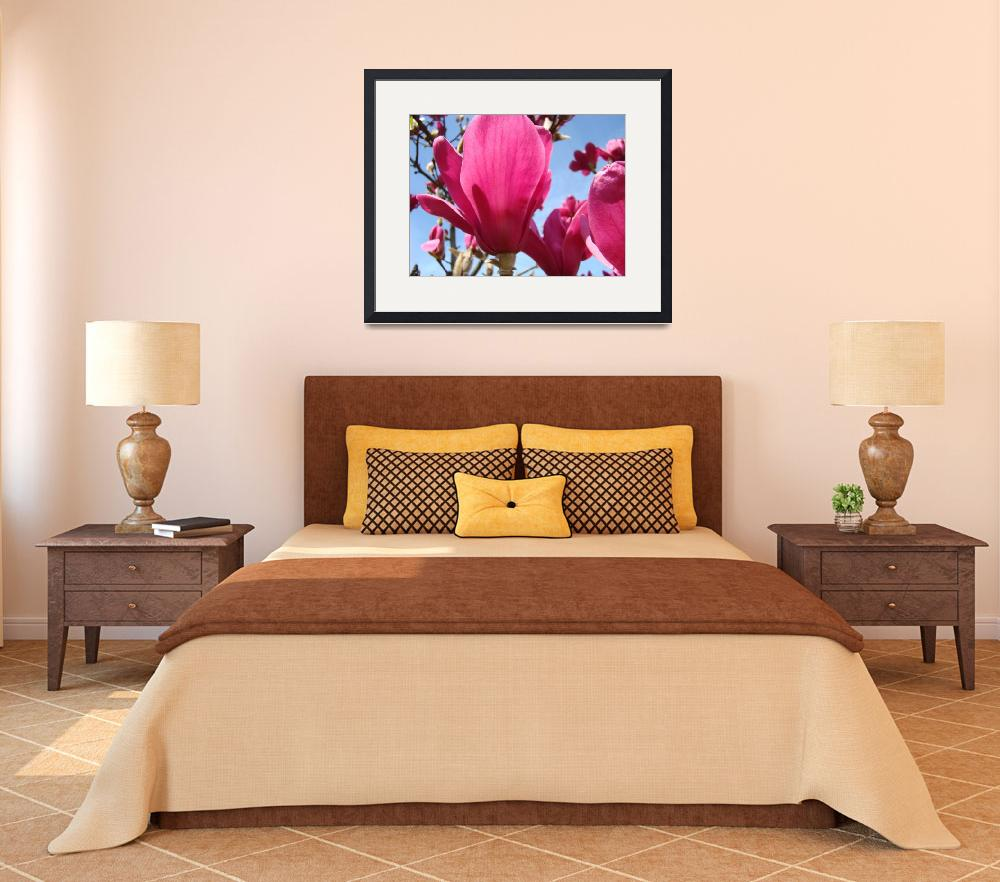 """Spring Magnolia Flowers 45 Magnolia Tree Art Print&quot  (2009) by BasleeTroutman"