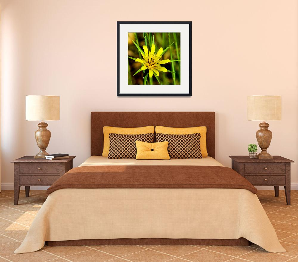 """Arizona Wildflower- Yellow Salsify&quot  (2009) by rayjacque"