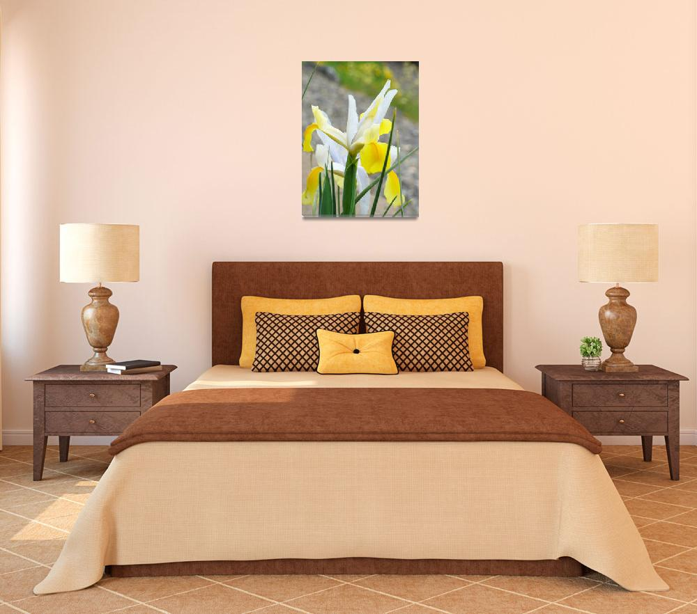 """Irises Yellow IRIS FLOWERS Spring Garden Art&quot  (2009) by BasleeTroutman"