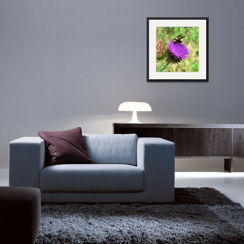 """Thistle Pollinator - Arizona Wildflower&quot  (2008) by rayjacque"