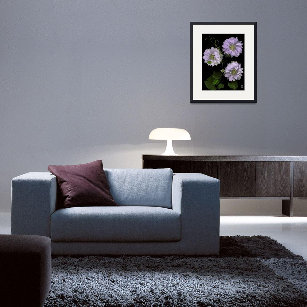 """Charming Multi - Petaled Clematis&quot  (2005) by thirdeyeimage"