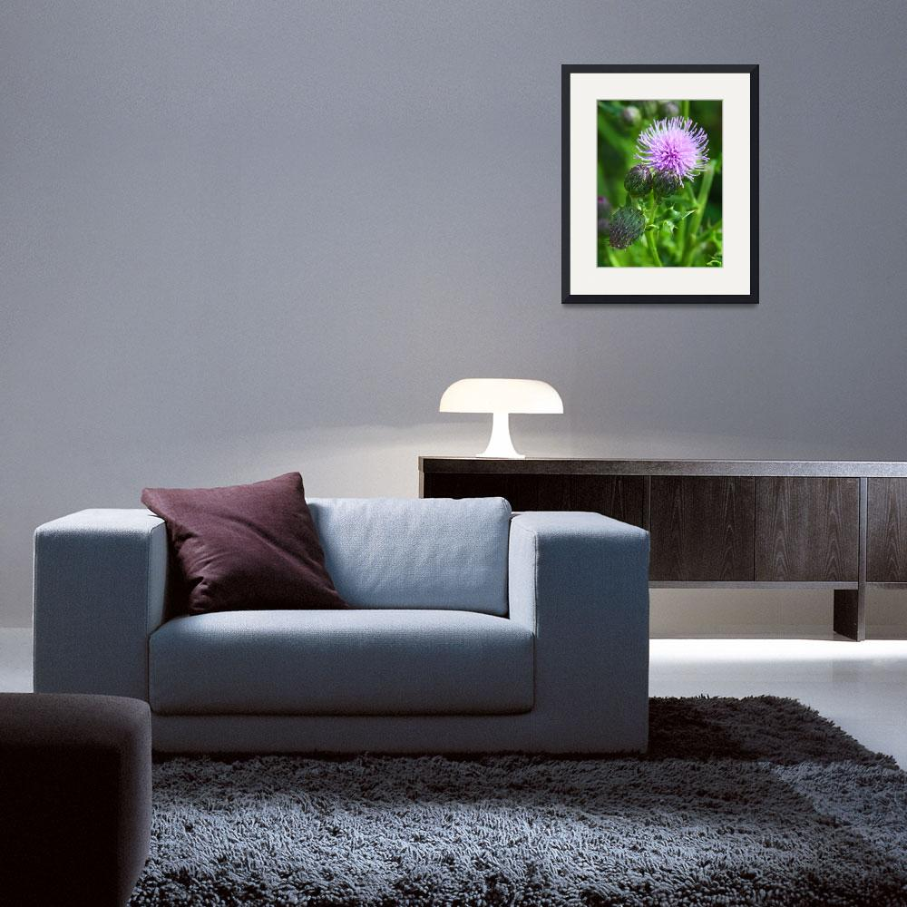"""Cirsium arvense Canada Thistle&quot  (2011) by vpicks"