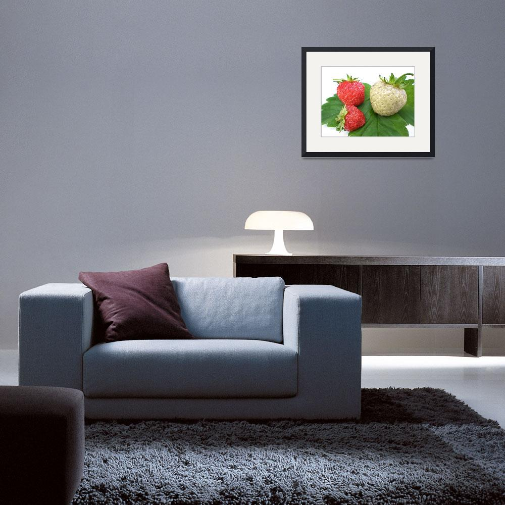 """white strawberry&quot  (2008) by Dessie"