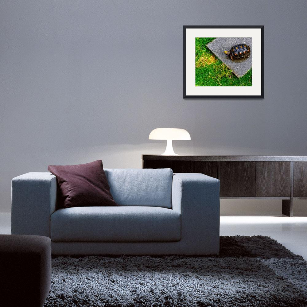 """Turtle Beauty&quot  (2012) by sandrapenadeortiz"
