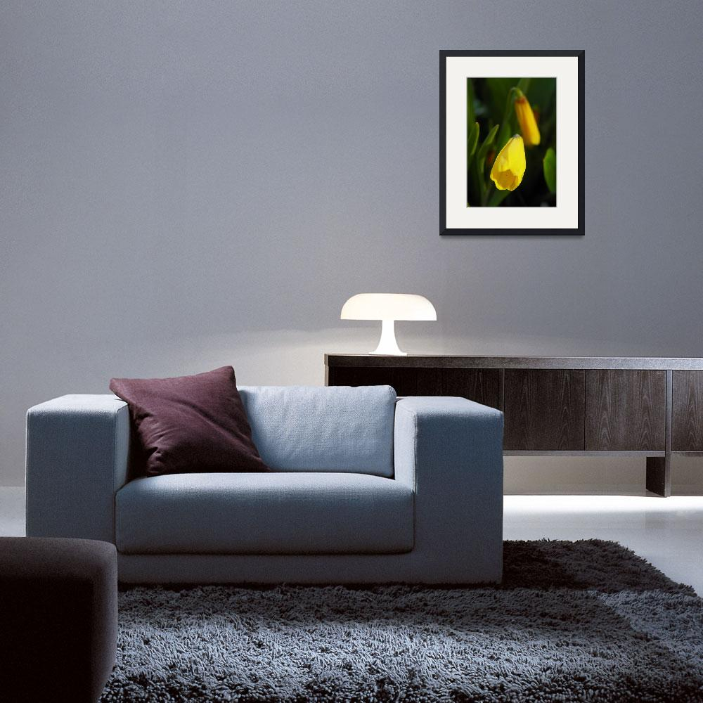 """Gold Bell Fritillaria pudica Yellow Fritillary&quot  (2013) by vpicks"