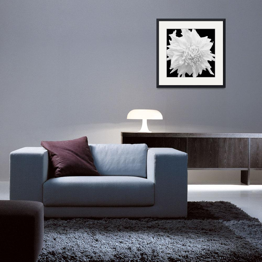 """White Frilled Dahlia&quot  (2009) by RussMartinPhotography"