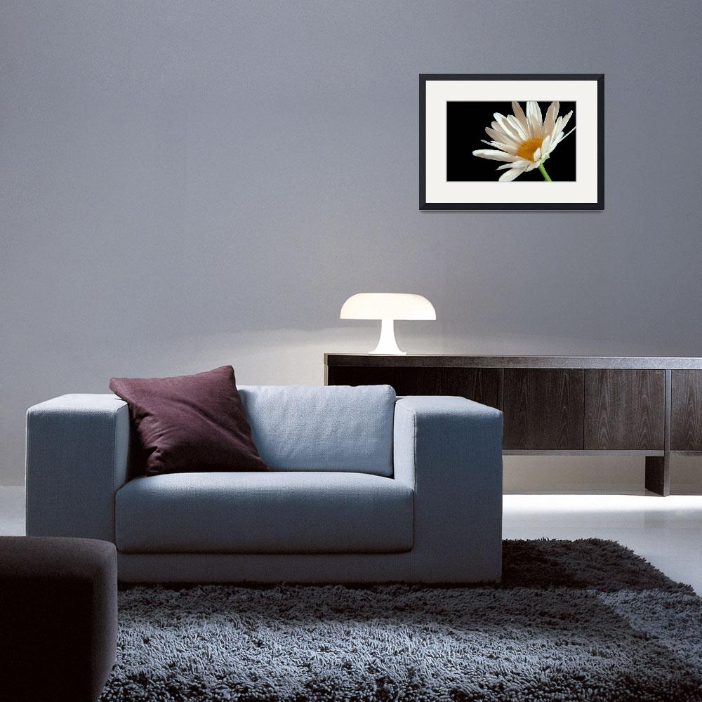 """Flower 02b White Spring Daisy&quot  (2010) by Ricardos"