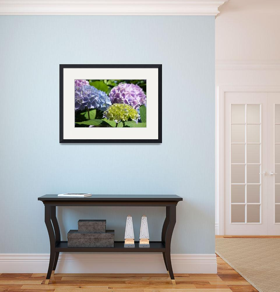 """Garden Photography Blue Lavender Green Hydrangeas&quot  (2014) by BasleeTroutman"