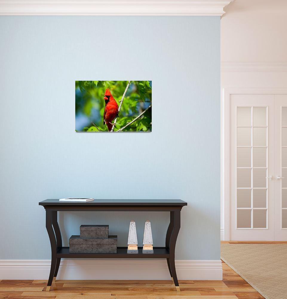 """Cardinal Red&quot  (2008) by tricia"