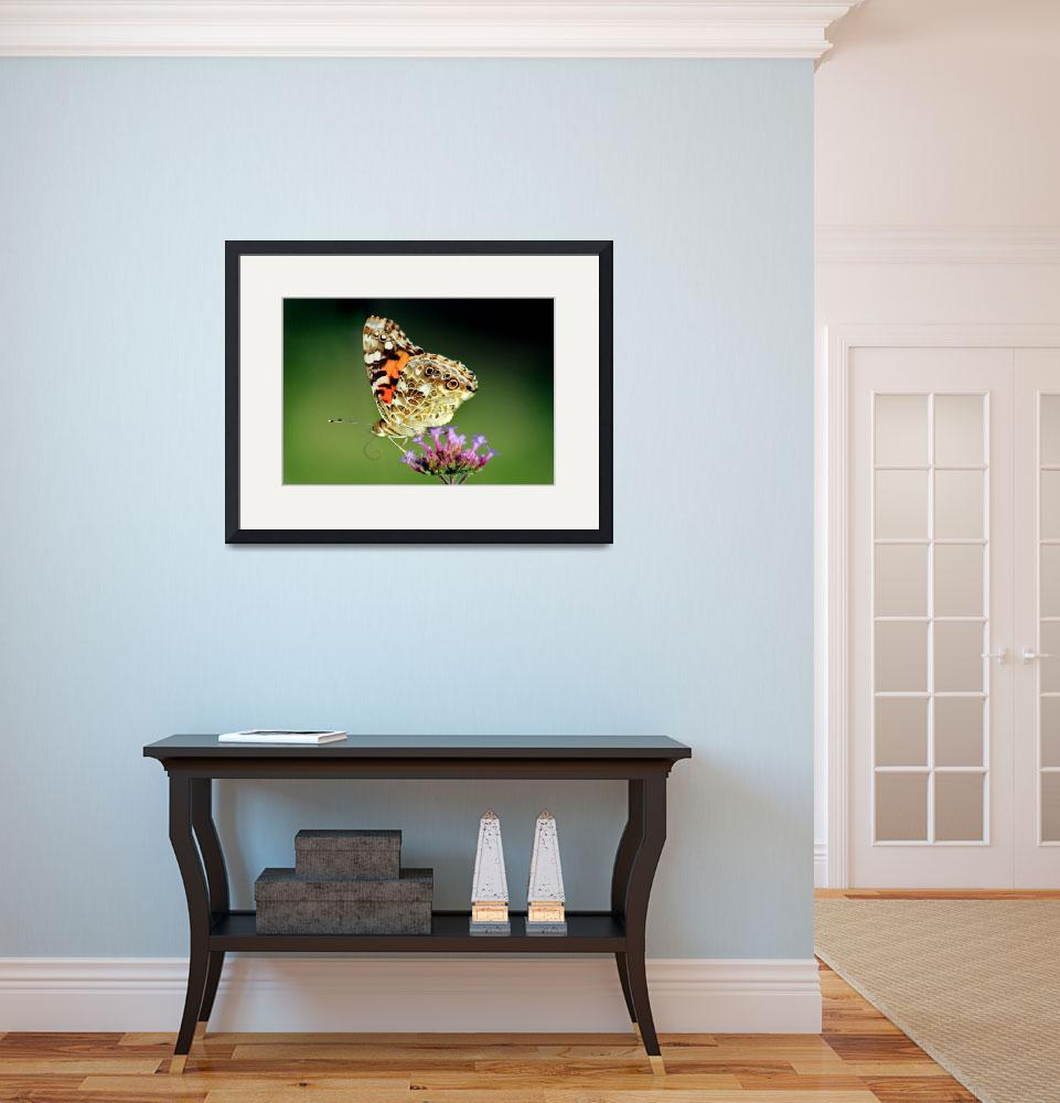 """American Painted Lady Butterfly on Green 2014&quot  (2014) by KsWorldArt"