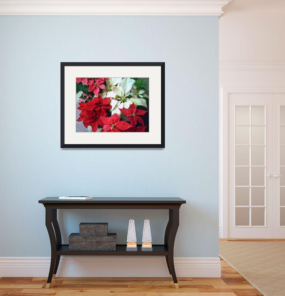 """Mixed color Poinsettias 1&quot  (2007) by ChristopherInMexico"