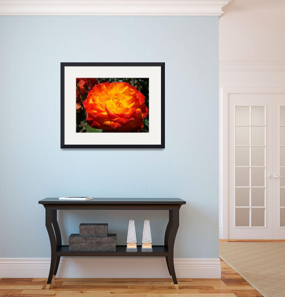 """Rose art prints Orange Red Roses Garden&quot  (2010) by BasleeTroutman"