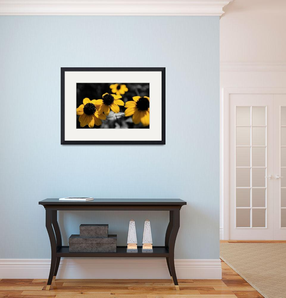 """Black-eyed Susan&quot  by ScottHovind"
