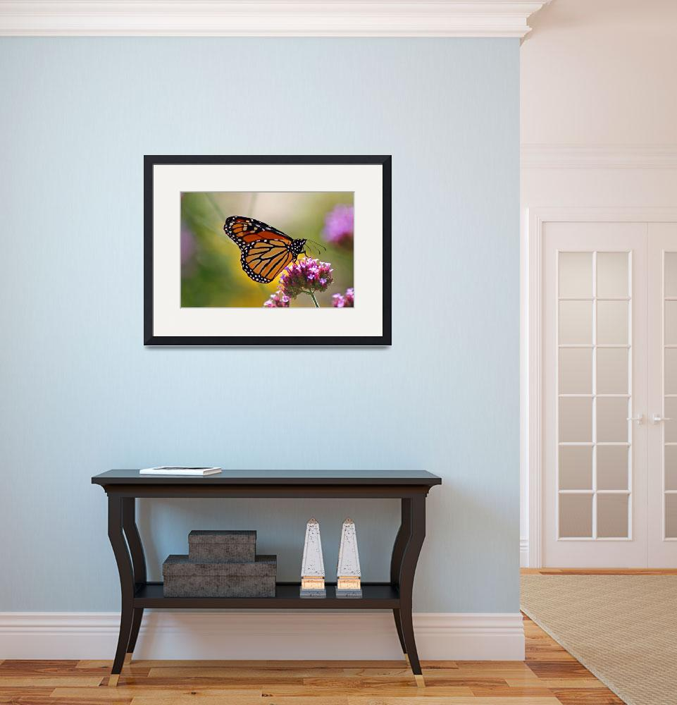 """Butterfly  Monarch  Lepidoptera&quot  (2012) by KsWorldArt"