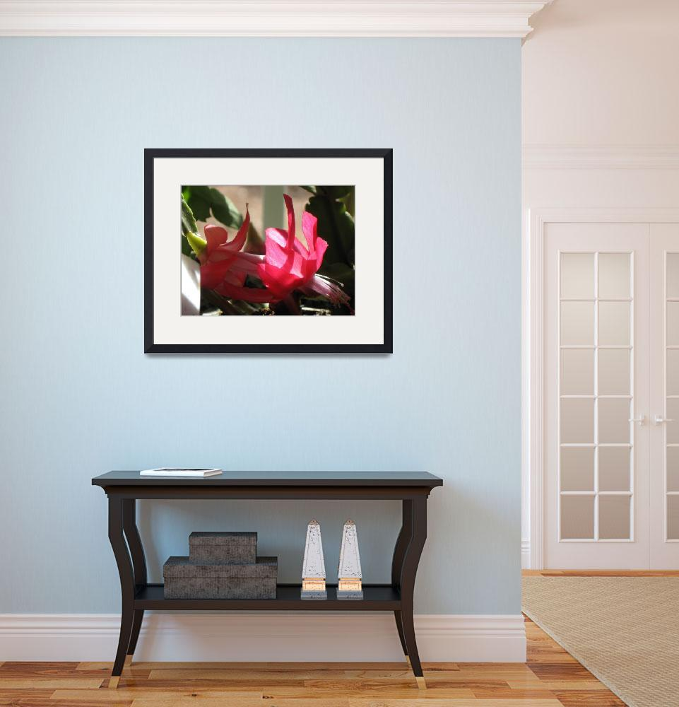 """Holiday cactus bloom 2&quot  (2009) by henrimonet"