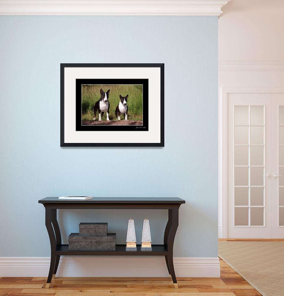 """Standard and Miniature Bull Terrier&quot  (2009) by alicevankempen"
