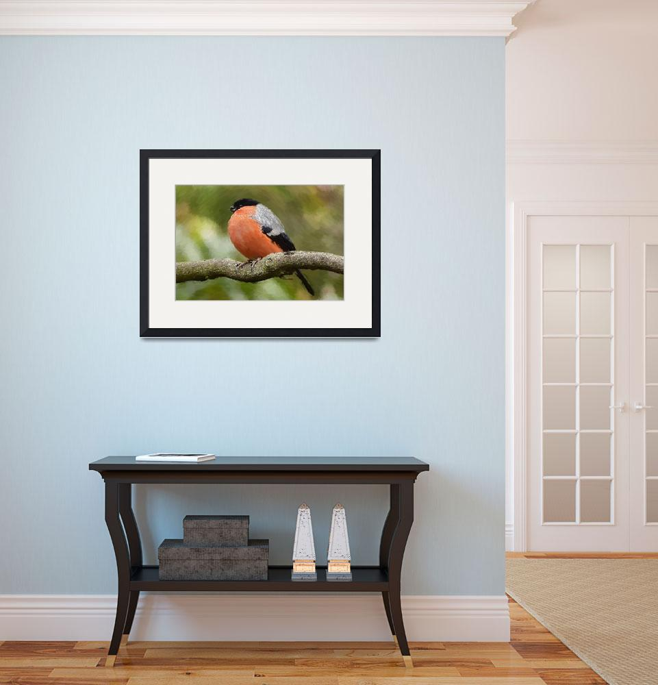 """Bullfinch - ID 16235-142810-1834&quot  by lurksart"