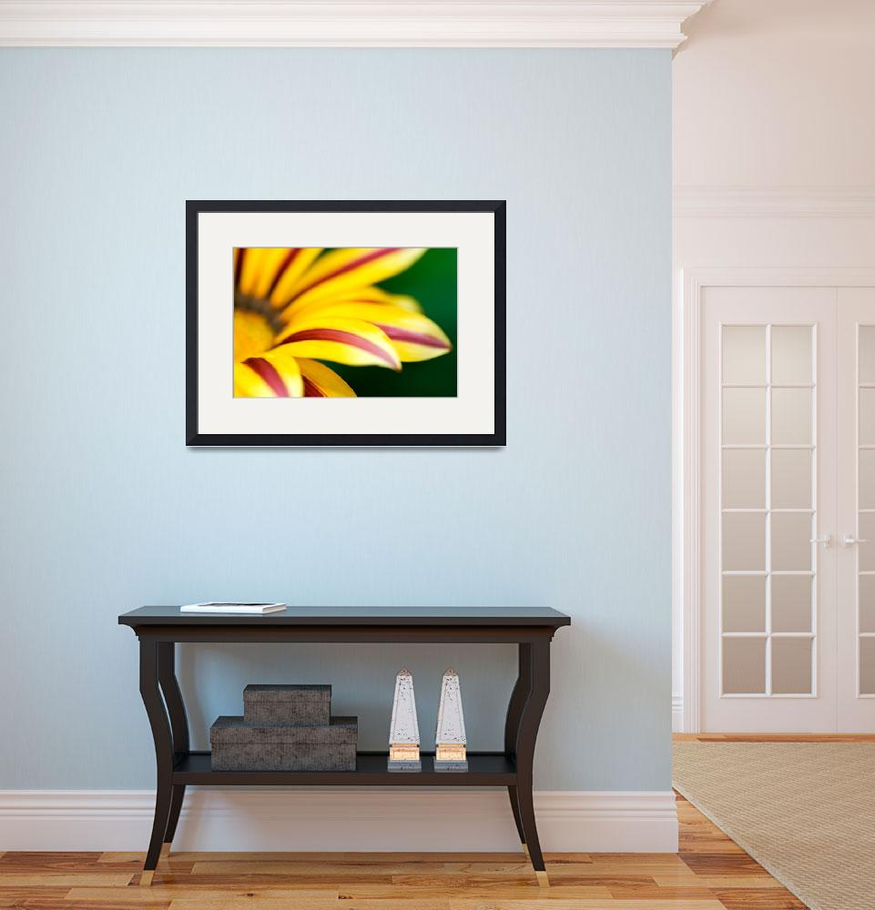 """Gazania&quot  (2008) by jlhphotography"