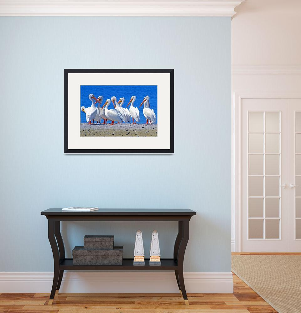 """American White Pelicans&quot  (2011) by shelshots"