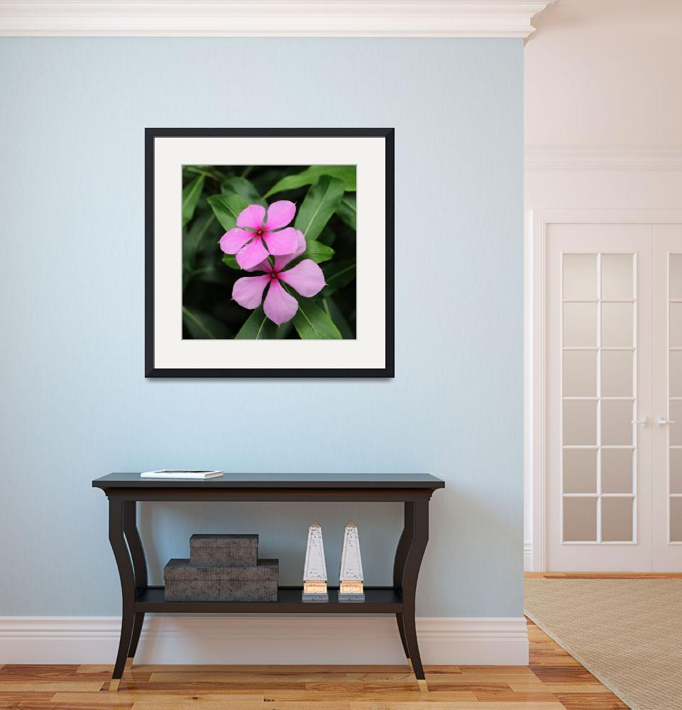 """Twin Madagascar Periwinkle Flowers&quot  (2014) by AdrianWale"