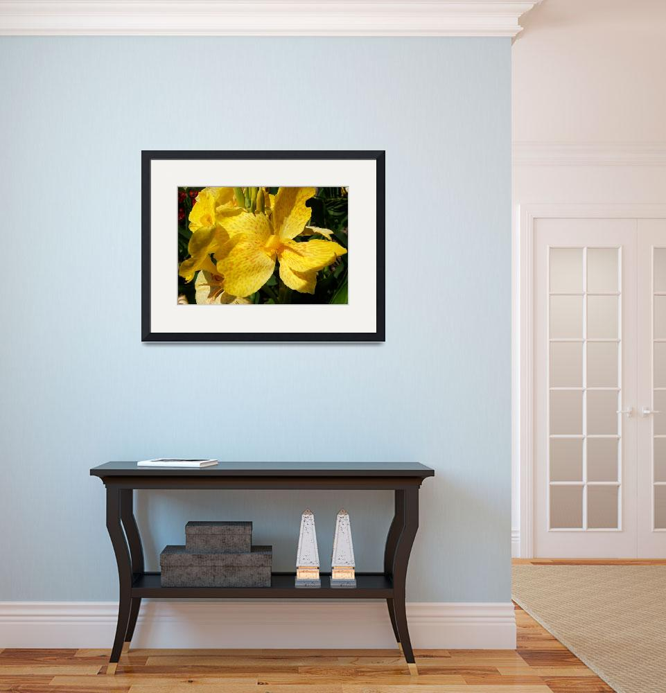 """Yellow Canna Lily&quot  (2012) by ShawnaRowe"