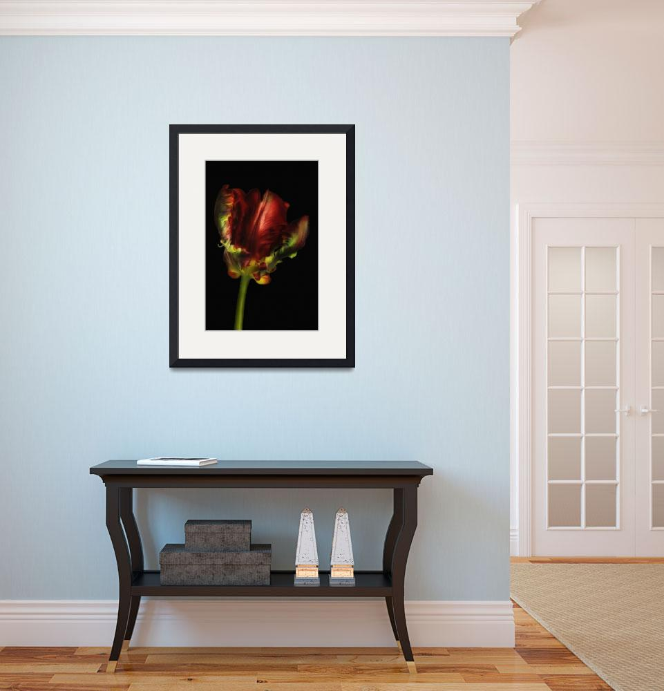 """Red Parrot Tulip on Black I&quot  (2012) by CoraNiele"
